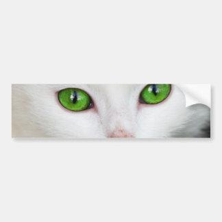 Cat with Green Eyes Bumper Sticker