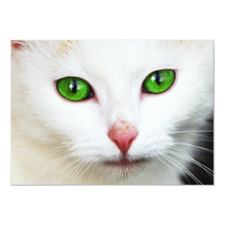 Cat with Green Eyes Invitation