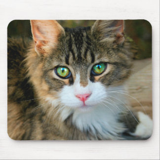 Cat With Green Eyes Mouse Pad