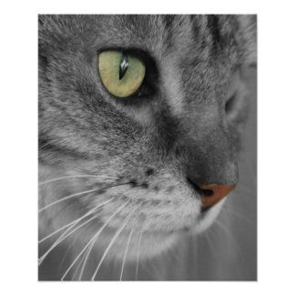 Cat with Green Eyes Poster Print
