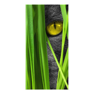 Cat with Green Leaf and Special Eyes Card