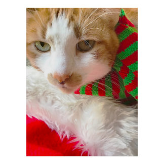 Cat with muffler and Santa hat Poster