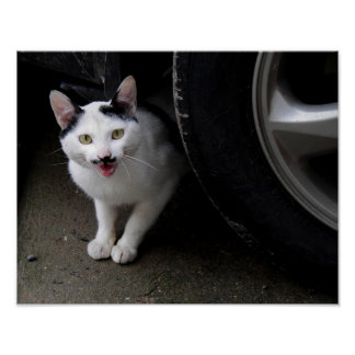 Cat with Mustache Poster