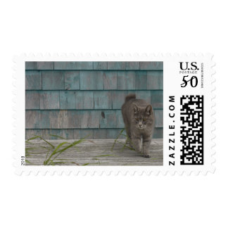 Cat with no tail postage