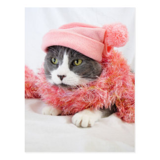 Cat with Pink Hat Postcard