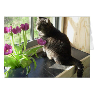 Cat with purple tulips card