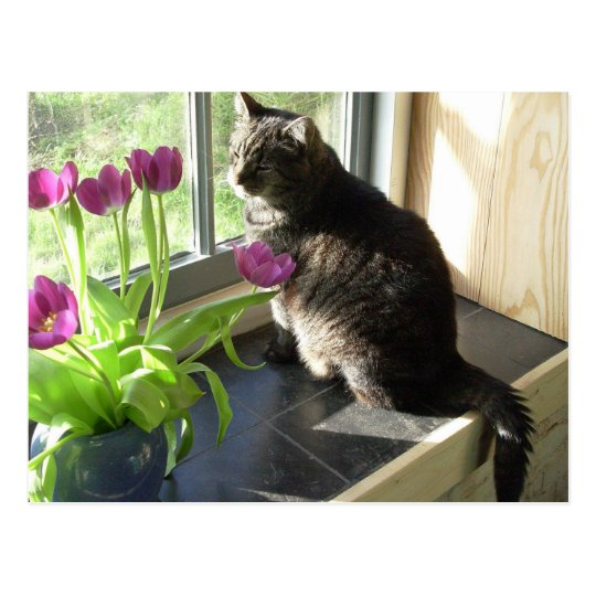 Cat with purple tulips postcard