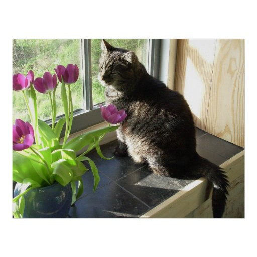 Cat with purple tulips poster