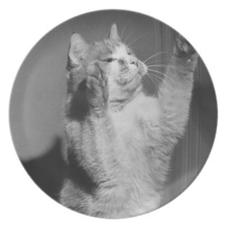 Cat with raised paws (B&W) Plate