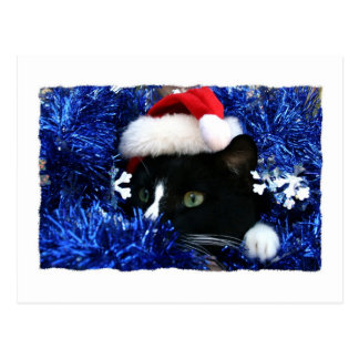 Cat with santa hat looking out from blue tinsel post card