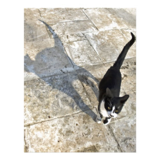 Cat with shadow walking towards camera letterhead