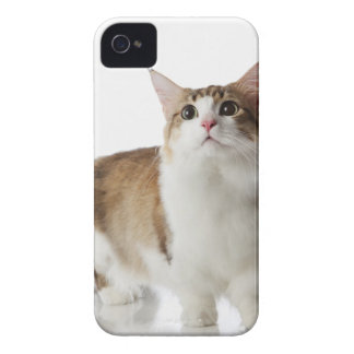 Cat with short feet Case-Mate iPhone 4 cases