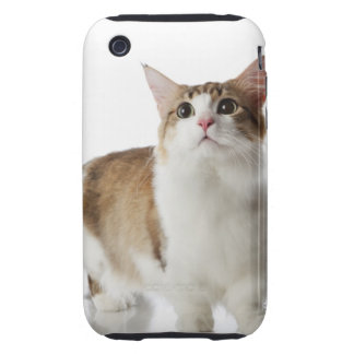 Cat with short feet tough iPhone 3 cover