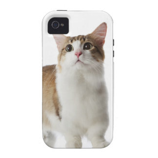 Cat with short feet Case-Mate iPhone 4 cover