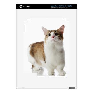 Cat with short feet iPad 3 skin