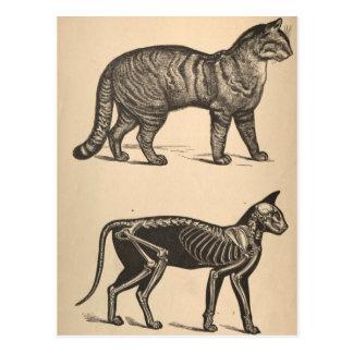 Cat with skeleton postcard