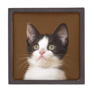 Cat With Staff Box