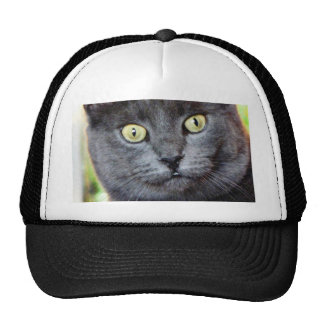 Cat With Staring Eyes Trucker Hats