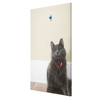 Cat with toy canvas print