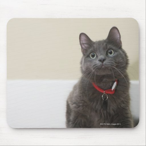 Cat with toy mouse pad