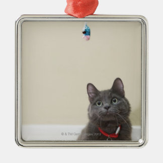 Cat with toy christmas tree ornament