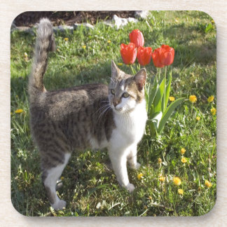 Cat With Tulips Drink Coaster