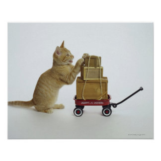 Cat with wagon and boxes poster