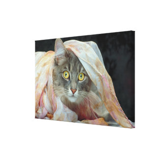 Cat wrapped in cloth canvas print