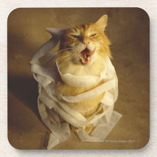 Cat wrapped in medical gauze drink coaster