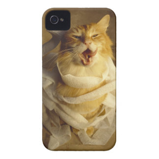 Cat wrapped in medical gauze iPhone 4 Case-Mate case