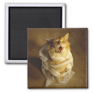Cat wrapped in medical gauze magnet