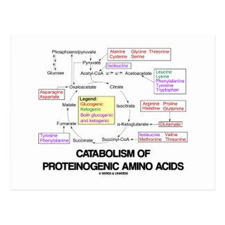 Catabolism Of Proteinogenic Amino Acids Postcard