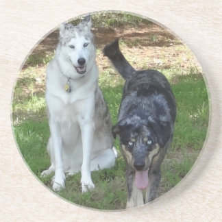 Catahoula and Ausky Dog Buddies Drink Coaster