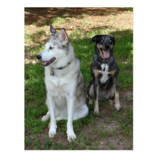 Catahoula and Ausky Dog Friendship Postcard