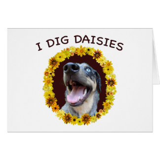 Catahoula Dog Digs Daisies Greeting Cards