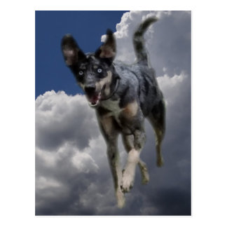 Catahoula Dog Running in Fluffy White Clouds Postcard