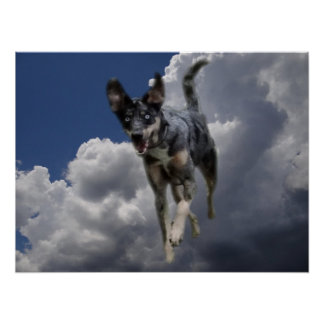 Catahoula Dog Running in Fluffy White Clouds Poster