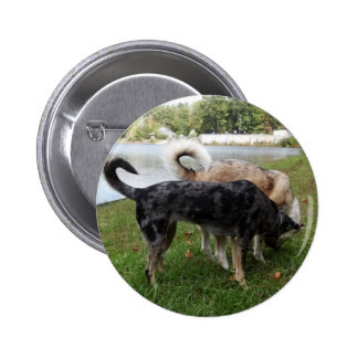 Catahoula Leopard Dog and Ausky Dog Sniffing Button