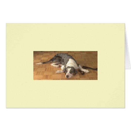 Catahoula Leopard Dog Card