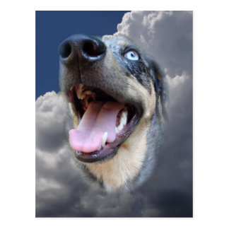 Catahoula Leopard Dog Fluffy Clouds Closeup Postcard