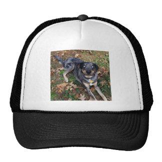 Catahoula Leopard Dog Glass Blue Eyes Trucker Hat