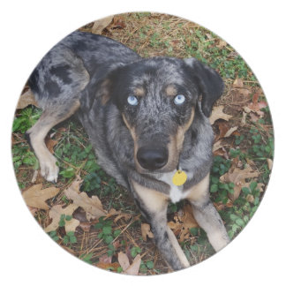 Catahoula Leopard Dog Laying Down Dinner Plate