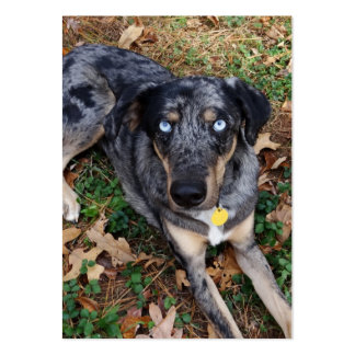 Catahoula Leopard Dog Laying Down Large Business Card