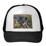 Catahoula Leopard Dog Laying Down Mesh Hat