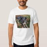 Catahoula Leopard Dog Laying Down T-shirt