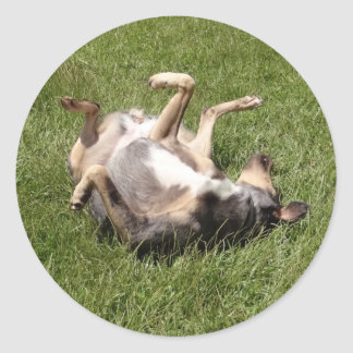 Catahoula Leopard Dog Rolling in Grass Classic Round Sticker