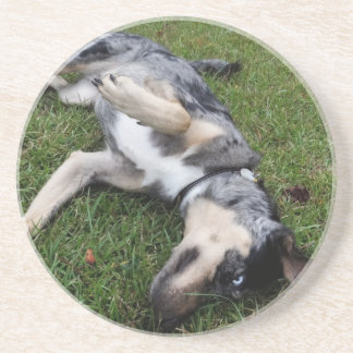 Catahoula Leopard Dog Rolling in Grass Coaster