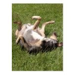 Catahoula Leopard Dog Rolling in Grass Postcard
