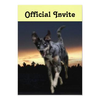 Catahoula Leopard Dog Running on Sunset Card