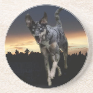 Catahoula Leopard Dog Running on Sunset Drink Coaster